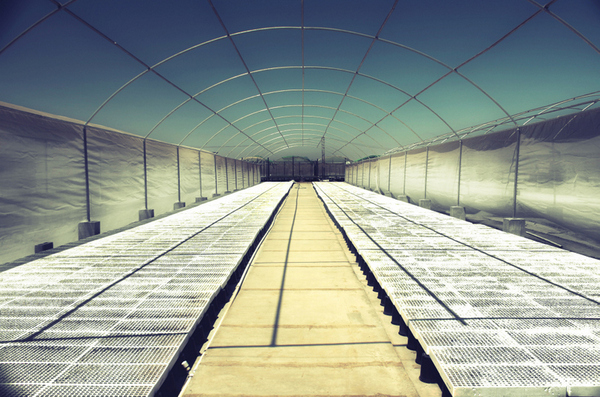 Large Commercial Greenhouse