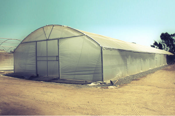 Large Commercial Greenhouse - Outside