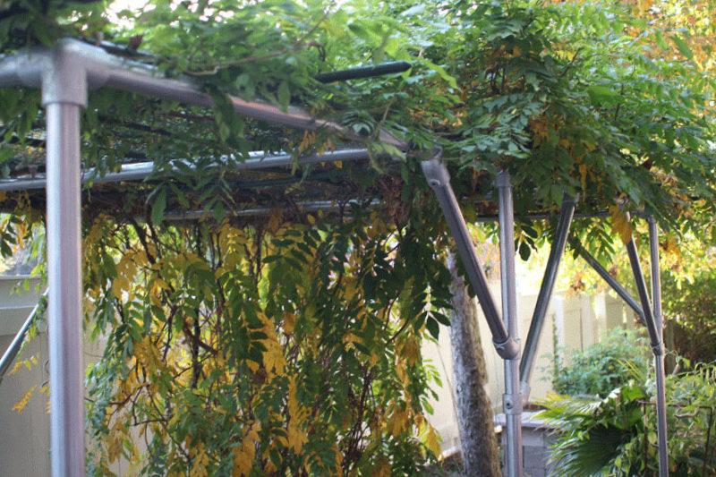 How to build a wisteria support trellis and pergola great idea design and pictures - How to build a grape vine support the natural roof ...