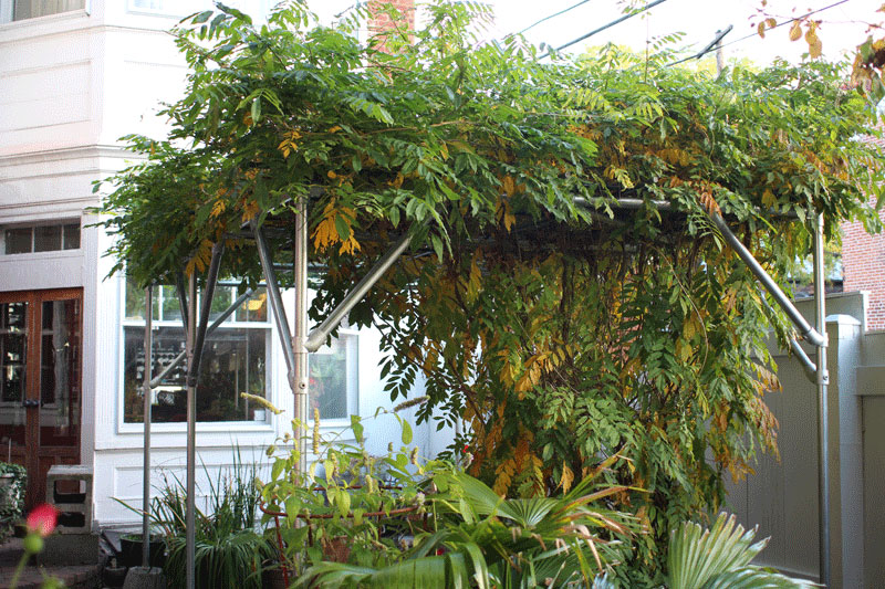 How To Build A Wisteria Support Trellis And Pergola
