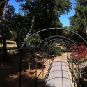 Monet's Arch – Amazing Rose Trellis